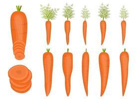 verse wortel vector ontwerp illustratie set geïsoleerd op een witte achtergrond