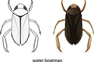 water schipper insect in kleur en doodle geïsoleerd vector