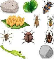verschillende soorten insecten met natuurelementen