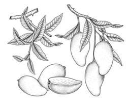 set van mango fruit hand getrokken elementen botanische illustratie vector