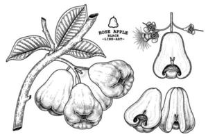 set rose apple fruit hand getrokken elementen botanische illustratie vector
