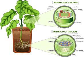 diagram met stam- en wortelstructuur vector