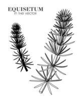 schets van paardestaart op een witte achtergrond vector