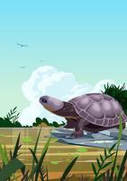moeras schildpadden vector