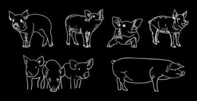 slagerij schoolbord gesneden van varkensvlees.