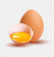 bruine rauwe eieren, een is gebroken, geïsoleerd. vector