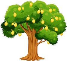 citroenboom geïsoleerd op een witte achtergrond vector