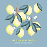Vector Hand getrokken citroenen