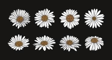 verzameling van daisy flower met inkt stijl vector