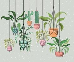 kamerplanten in macraméhangers