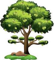 guave fruitboom in cartoon stijl geïsoleerd op een witte achtergrond