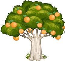 sinaasappelboom geïsoleerd op een witte achtergrond vector