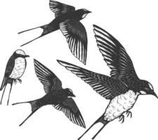 zwaluwen vector hand tekenen