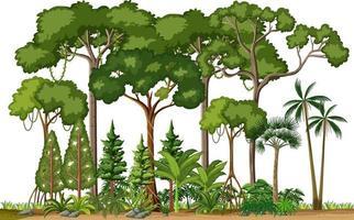 set van verschillende regenwoudbomen op witte achtergrond