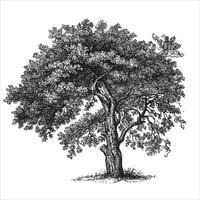 appelboom vintage illustraties vector