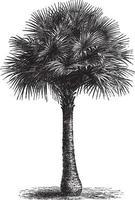 fan palmboom vintage illustraties vector