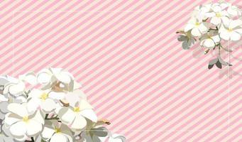 vintage tropische frangipanibloem op de roze achtergrond van de strookpastelkleur vector