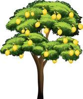 citroenboom geïsoleerd op een witte achtergrond
