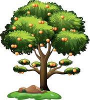 sinaasappelboom geïsoleerd op een witte achtergrond