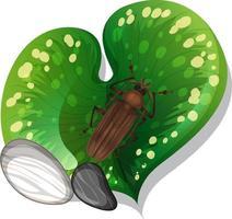 bovenaanzicht van insect op een blad geïsoleerd