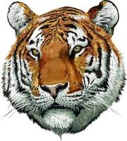 tijger gezicht kleur vector