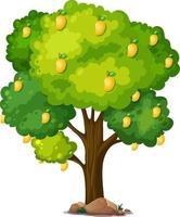 gele mangoboom geïsoleerd op een witte achtergrond