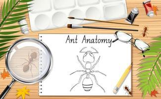 een doodle tekening van mier anatomie vector