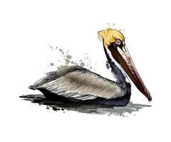pelikaan uit een scheutje aquarel, gekleurde tekening, realistisch. vectorillustratie van verven