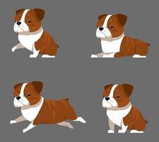 Engelse bulldog in verschillende poses. vector