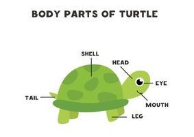 lichaamsdelen van de schildpad. regeling voor kinderen.
