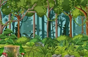 bosscène met liaan en veel bomen vector