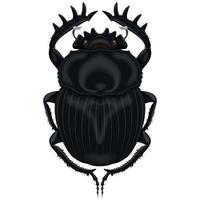 illustratie van insect, mestkever