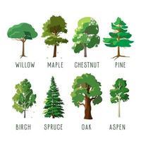 aantal geïsoleerde bomen in het zomerseizoen vector