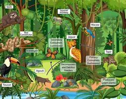 voedselketen diagram concept op bos achtergrond