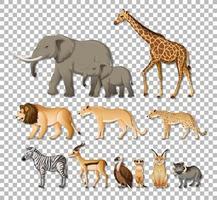 set van geïsoleerde wilde Afrikaanse dieren vector