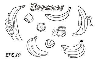 vector set van bananen. banaan in de hand, plakjes banaan, bananen in een bos.
