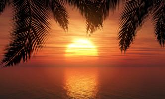 Palmen tegen zonsonderganghemel