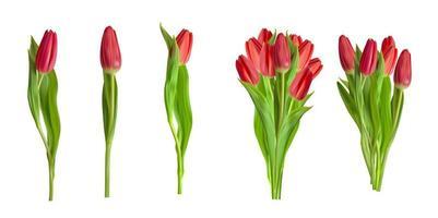 realistische rode tulpen collectie set bloem geïsoleerd op een witte achtergrond. vector illustratie