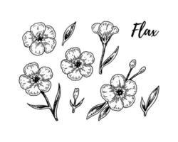 set hand getrokken vlasbloemen. vectorillustratie in schetsstijl voor linnenzaden en olieverpakkingen