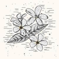 Jasmine vectorillustratie vector