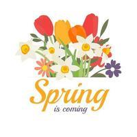 de lente komt achtergrond met een boeket van lentebloemen tulpen en narcissen. vector illustratie. eps10