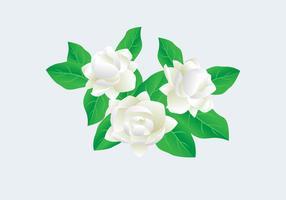 Jasmine vectorillustratie
