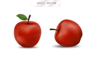 realistische appel. fruit en verse appel vector. vector