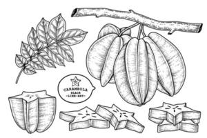 set van sterfruit of carambola fruit hand getrokken elementen botanische illustratie vector