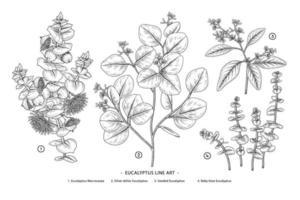 eucalyptus tak hand getekend botanische illustratie retro stijl vector