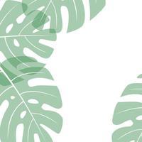 monstera - vectorblad op een witte vierkante achtergrond, plaats voor tekst vector