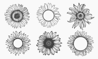 schets van zonnebloem set. hand getekende schets. vector illustratie.