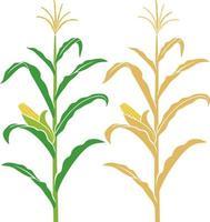 maïs stengel vectorillustratie vector