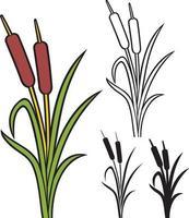 riet - biezen en gras vector