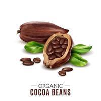 realistische cacaosamenstelling vectorillustratie vector